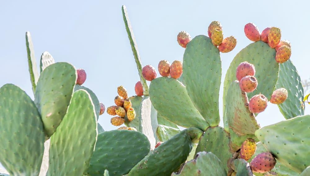 Prickly Pear Chia Fresca - Bauman College